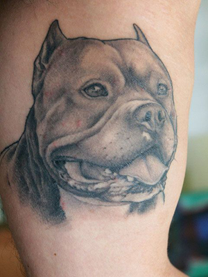 Pit Bull Tattoos : Tattoo Art: World's Most Popular Tattoo Designs. bull dog